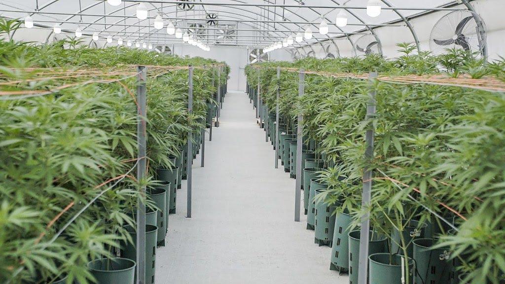 2020-12-2 PRENSA En Jujuy, Uñac firmó un convenio con Israel para capacitar al personal de salud en el uso e indicaciones del cannabis medicinal (11)